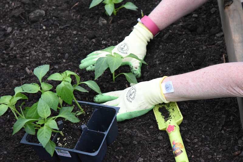 Community_garden_brick_4